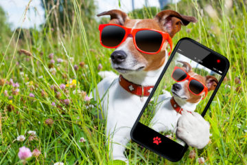 dog in grass taking a selfie looking so cool
